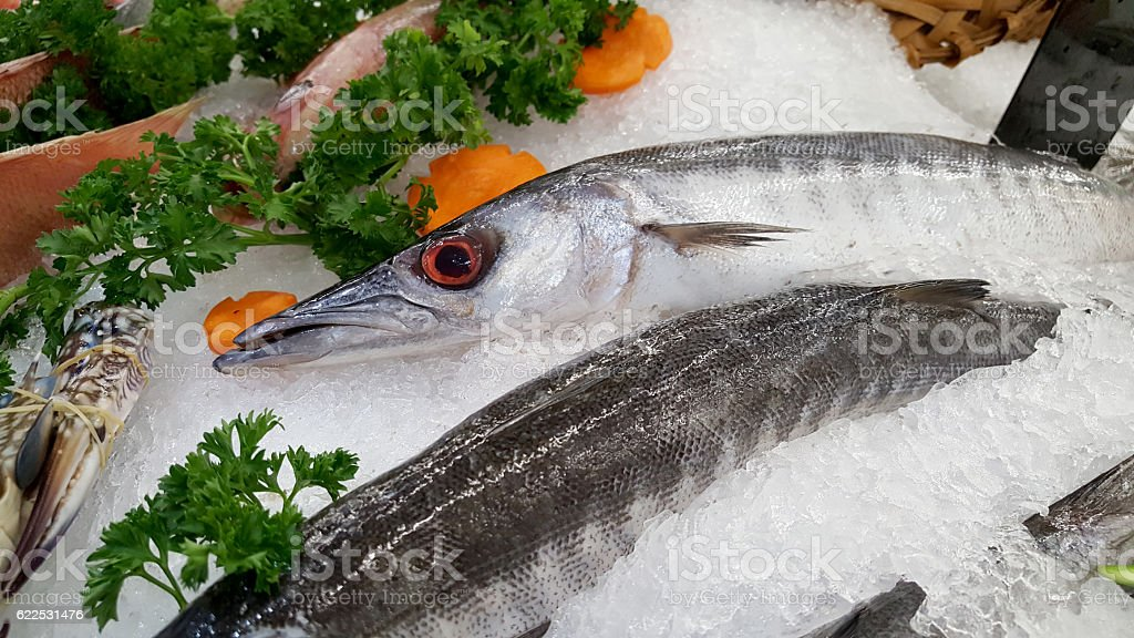 barracuda fish on an ice. - foto de stock