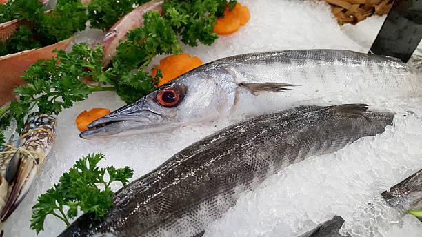 barracuda fish on an ice. - foto de acervo