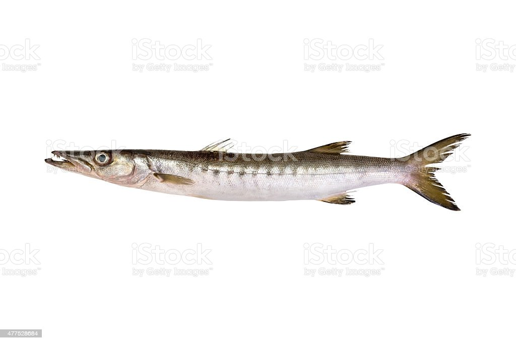 Barracuda de aislado - foto de stock