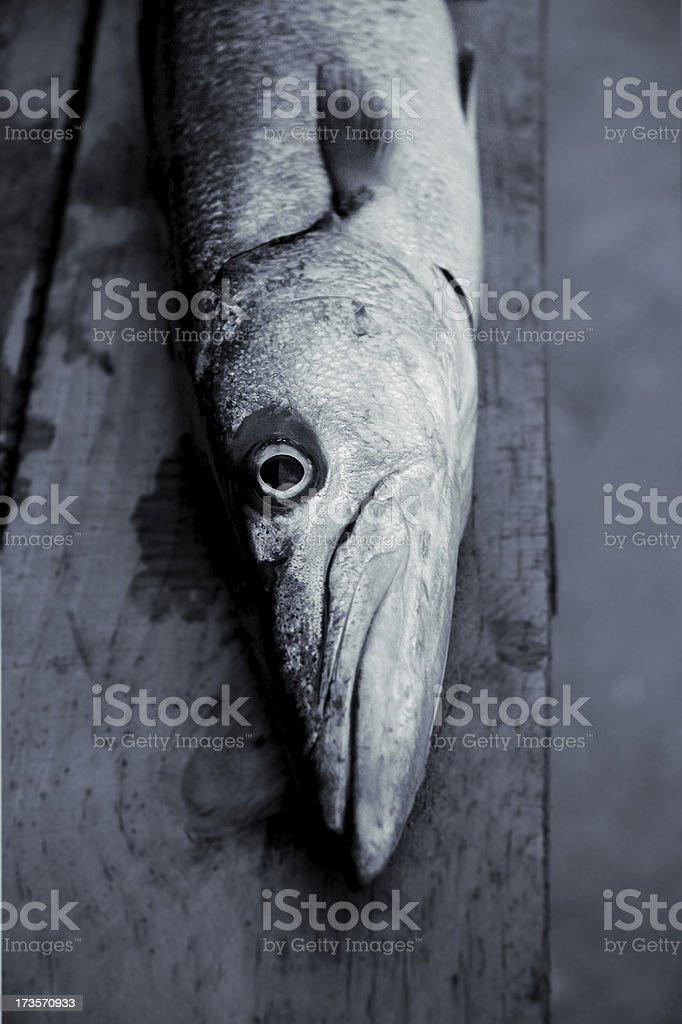 barracuda on planks royalty-free stock photo