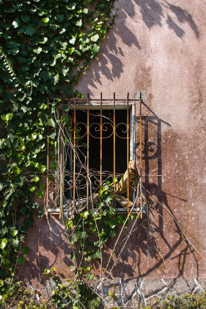 Barred old window with plants stock photo