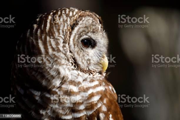 Barred owl profile picture id1135206889?b=1&k=6&m=1135206889&s=612x612&h=i uz2 dq5cvy rss202eb2sgpvpgwiojcl69n3rvses=