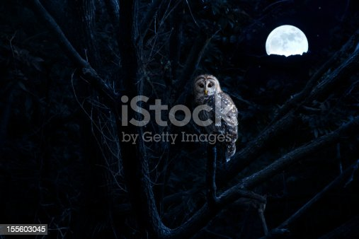 This is a photo illustration of a quiet night, a bright moon rising over the clouds illuminates the darkness, and a Barred Owl sits motionless in the blue moonlight. slight diffuse glow added to enhance scene. All my own components in this photo.