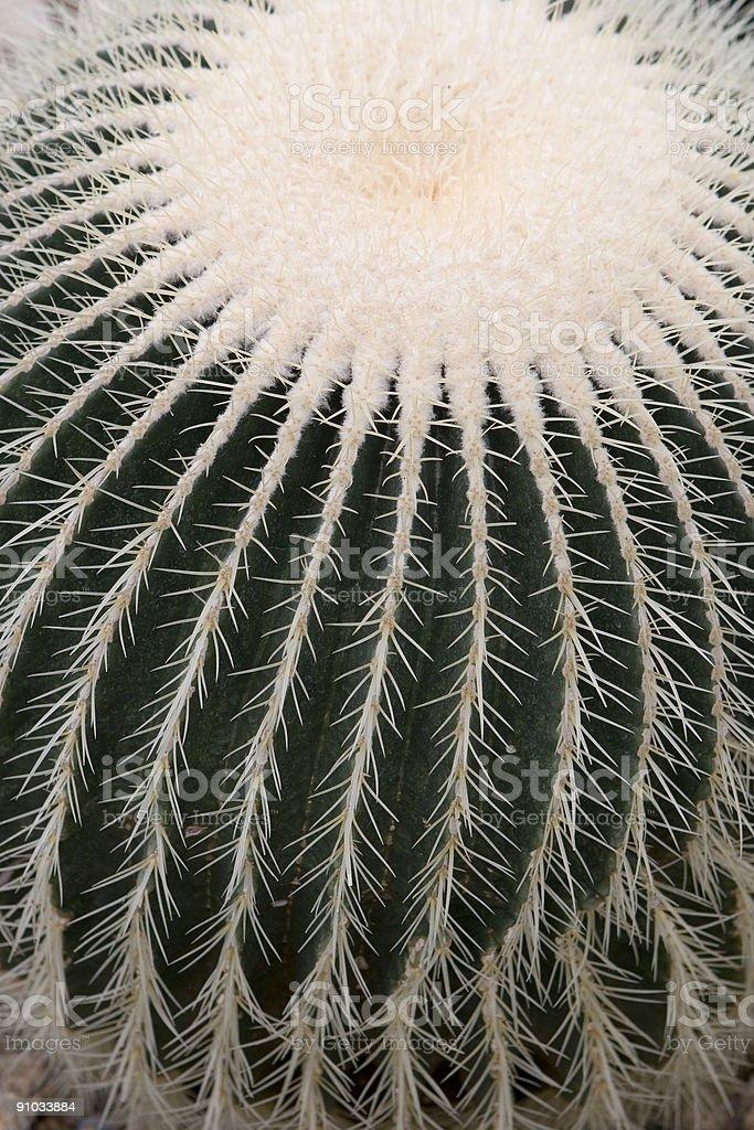 Barrel Cactus royalty-free stock photo