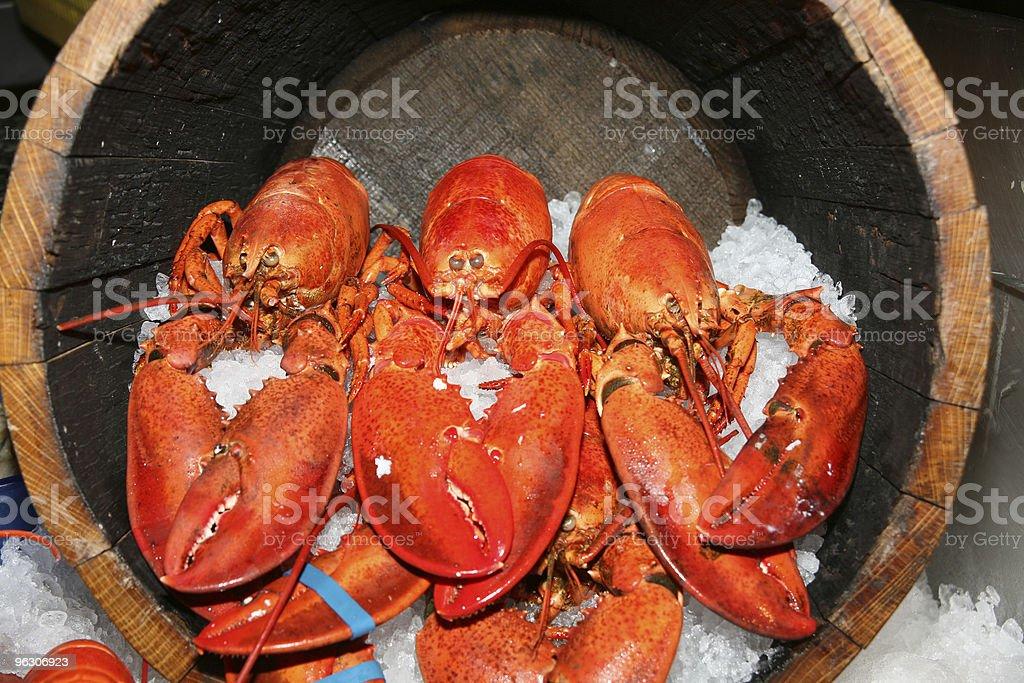Barrel O Lobsters royalty-free stock photo