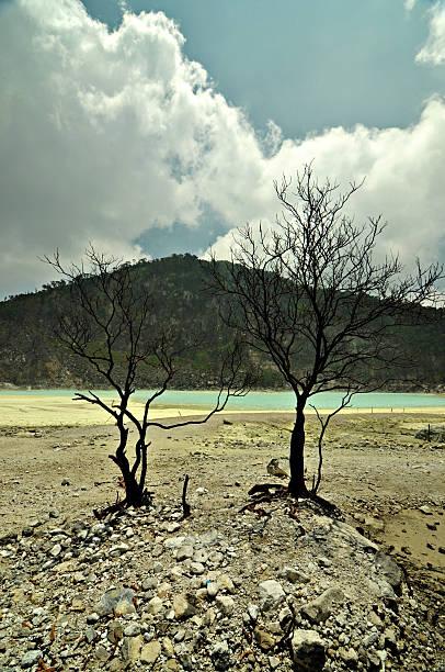 árido mirando tree on rocky ácido sulfúrico piso de blanco crater - kawah putih fotografías e imágenes de stock