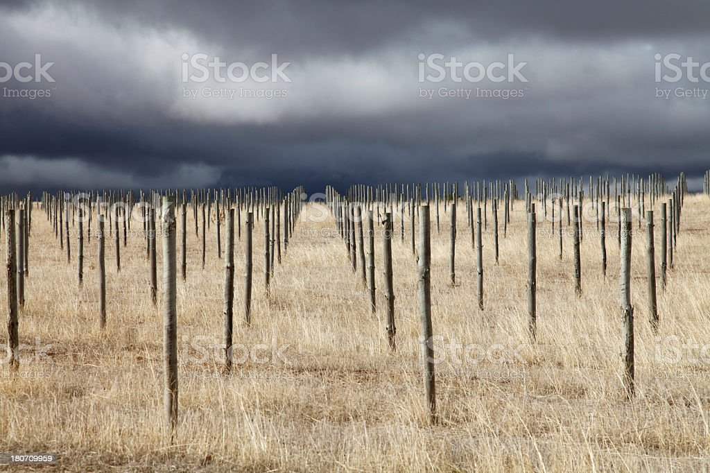 Barren Vineyard stock photo