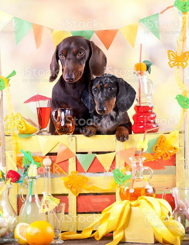 bartender dogs and bottle of lemonade stock photo