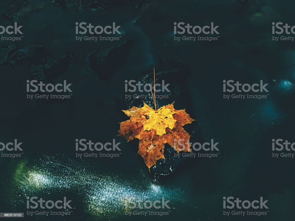 Basalt stone and colorful leaves below waterfall in autumn. Shinning bubbles in dark water create bright trails stock photo