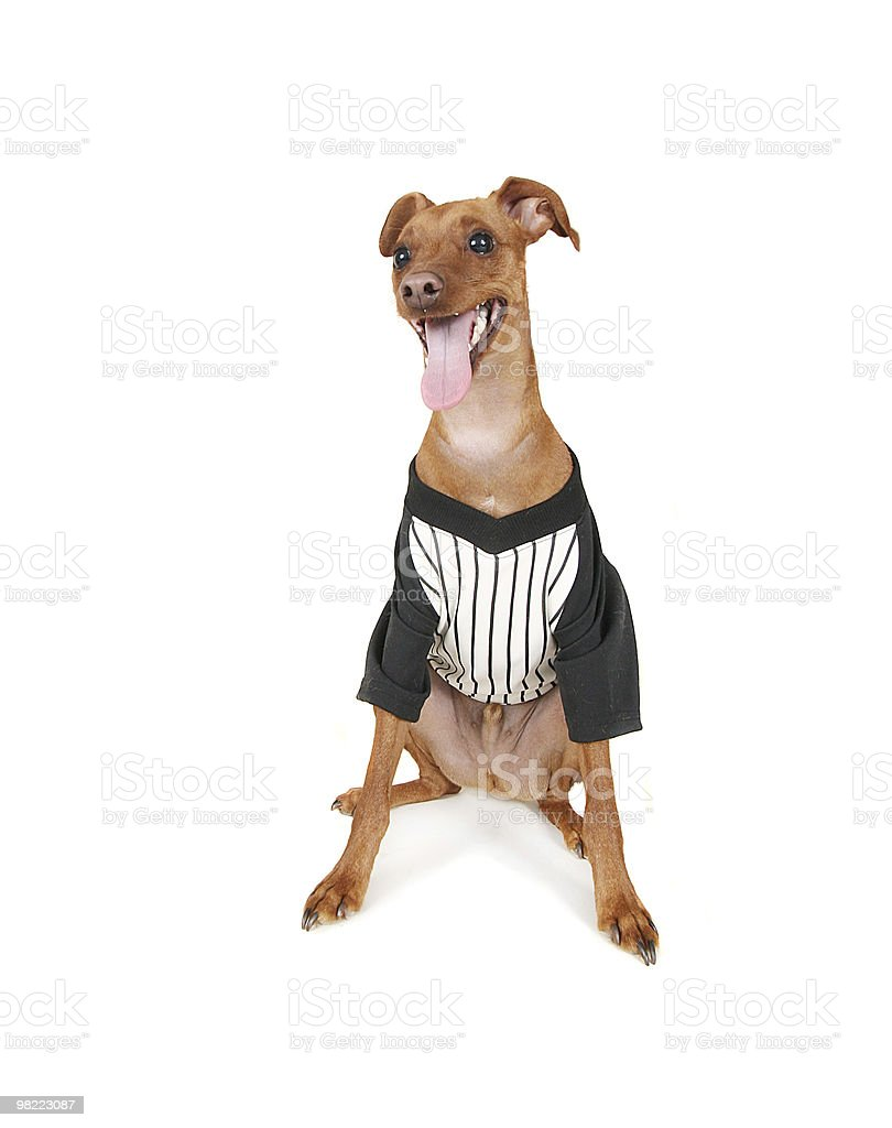 baseball dog royalty-free stock photo