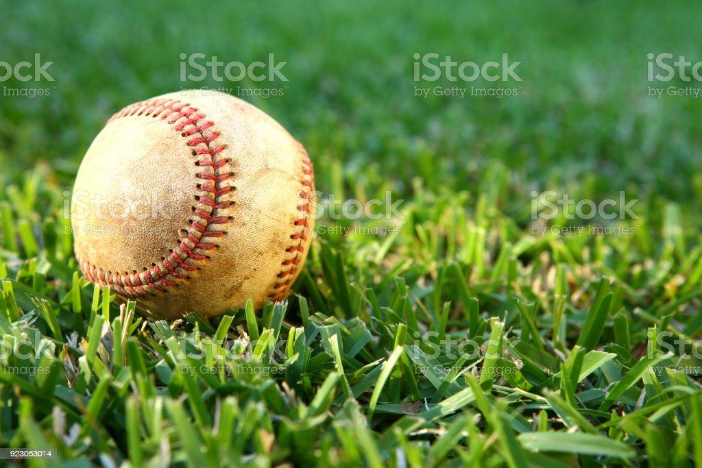 Baseball in the Sun on Green Grass stock photo