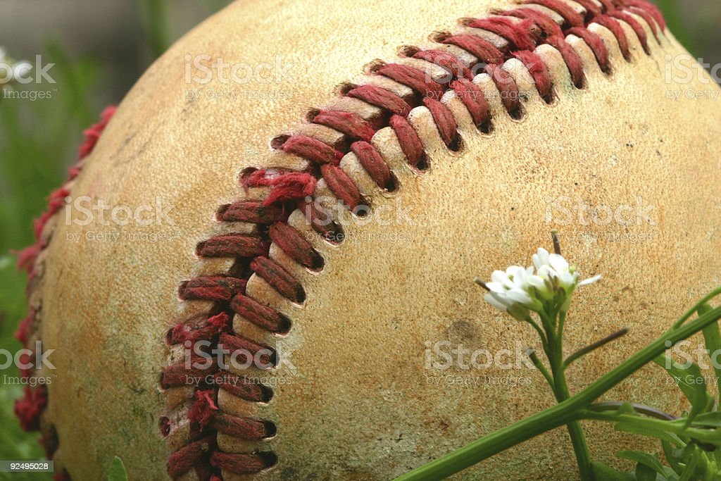 Baseball in the weeds royalty-free stock photo