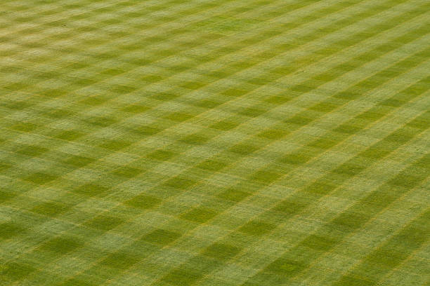 Baseball Outfield Grass stock photo