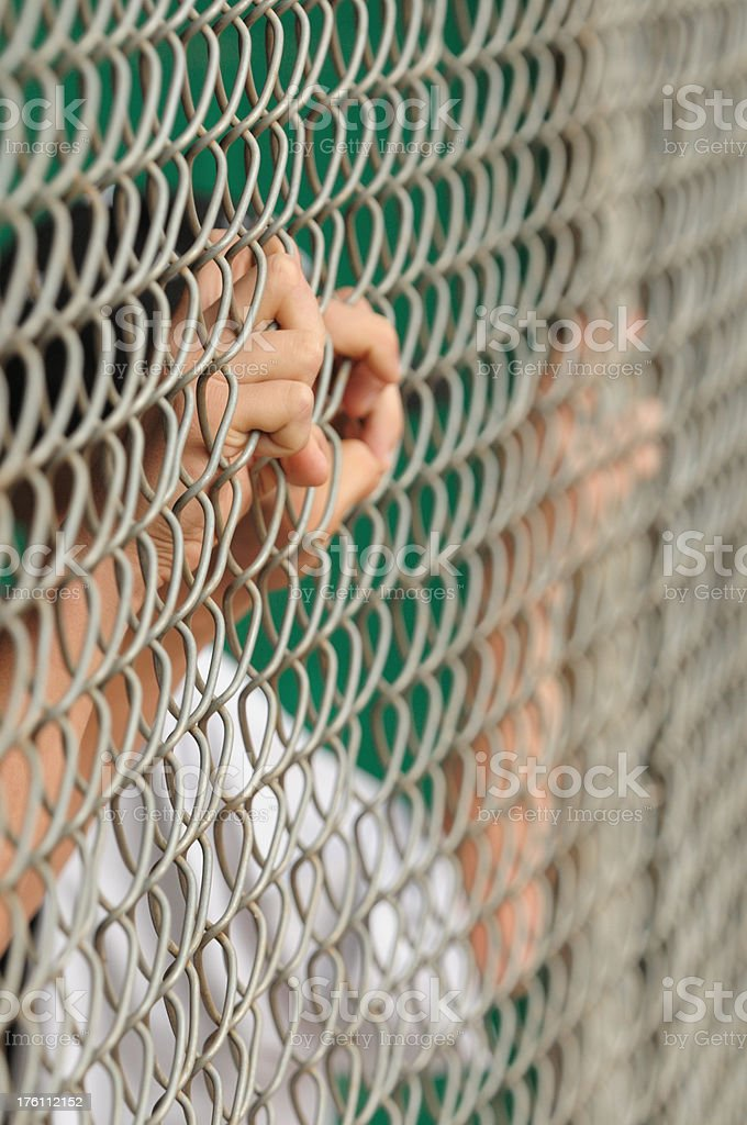 Baseball player hands on dugout fence royalty-free stock photo