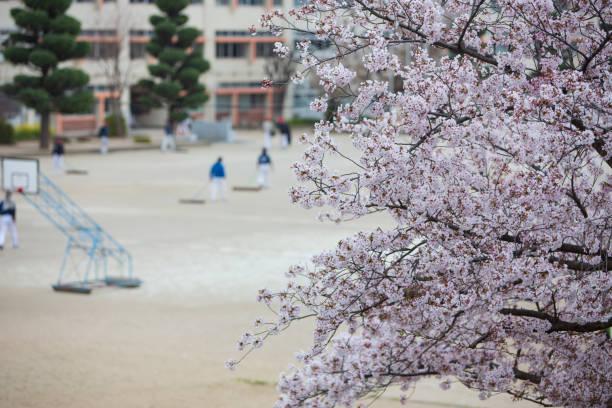 桜の花の下で野球の練習。 - 小学校 ストックフォトと画像