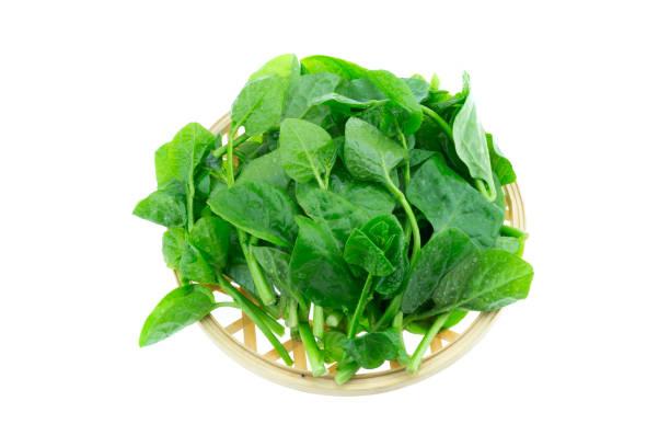 Basella Alba Malabar Spinach isolated on white background stock photo