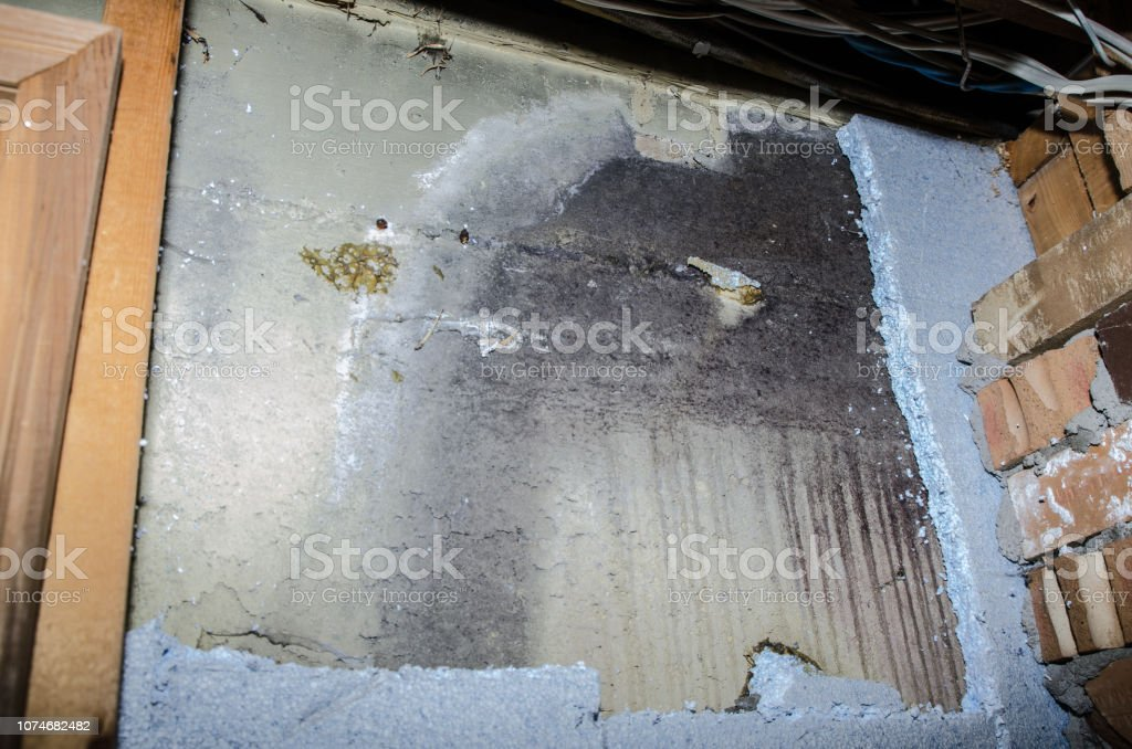 Basement concrete wall full of mold behind the polystyrene isolation