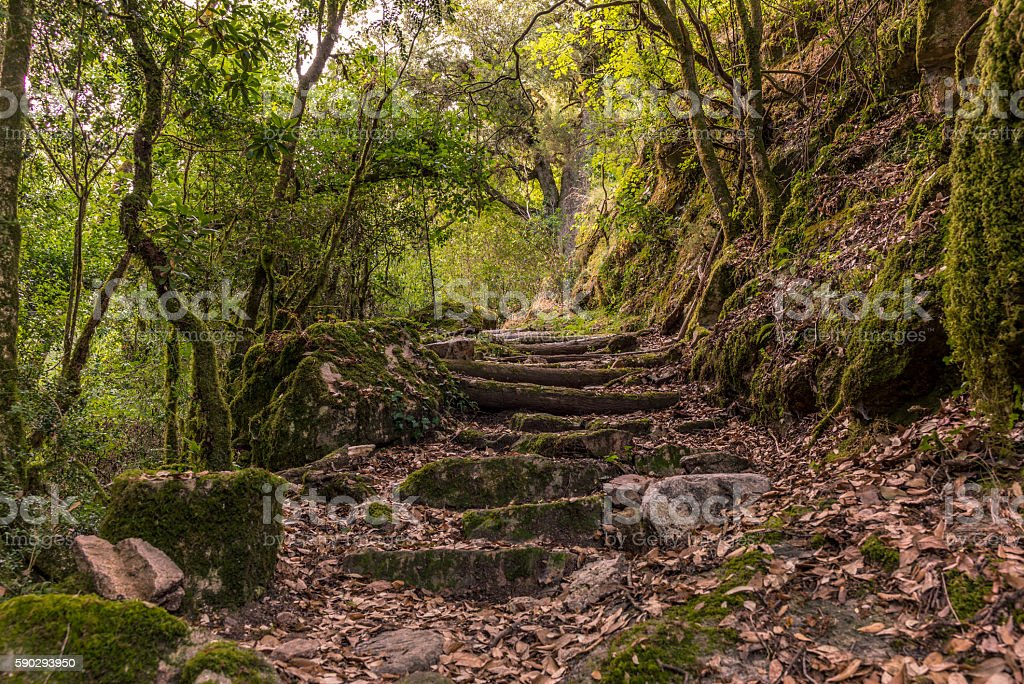 Basic staircase on a hike in the mountains in Corsica Стоковые фото Стоковая фотография