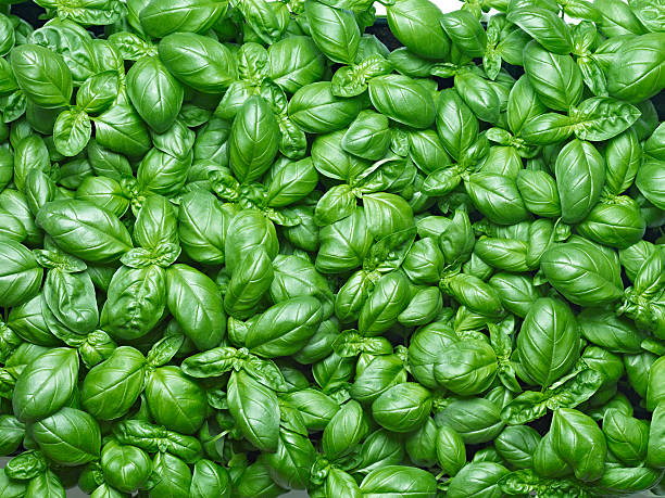 basil background - basil stock photos and pictures