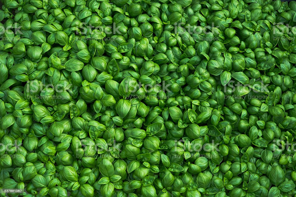 Basil background​​​ foto