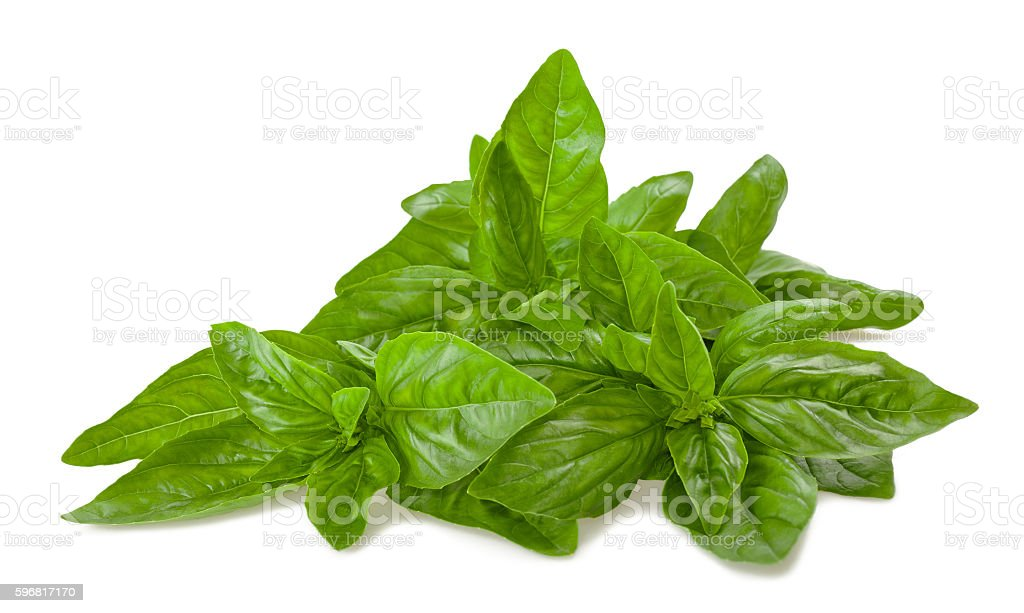 basil bunch isolated on white