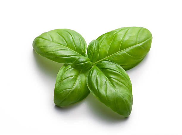 basil butterfly - basil stock photos and pictures