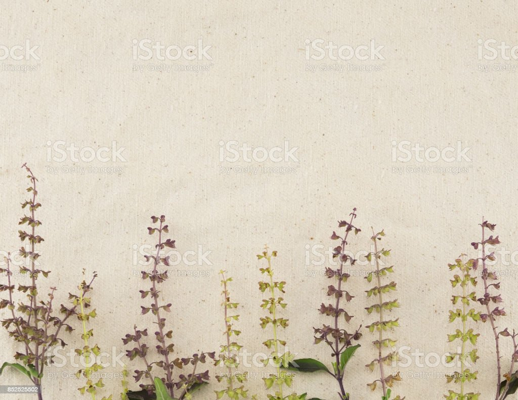 Basil flowers on white muslin fabric with copy space stock photo