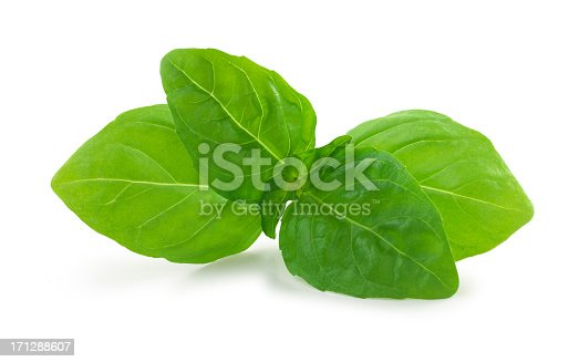 Fresh basil  on white background with clipping path