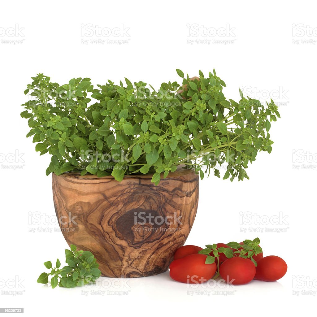 Basil Herb and Tomatoes royalty-free stock photo