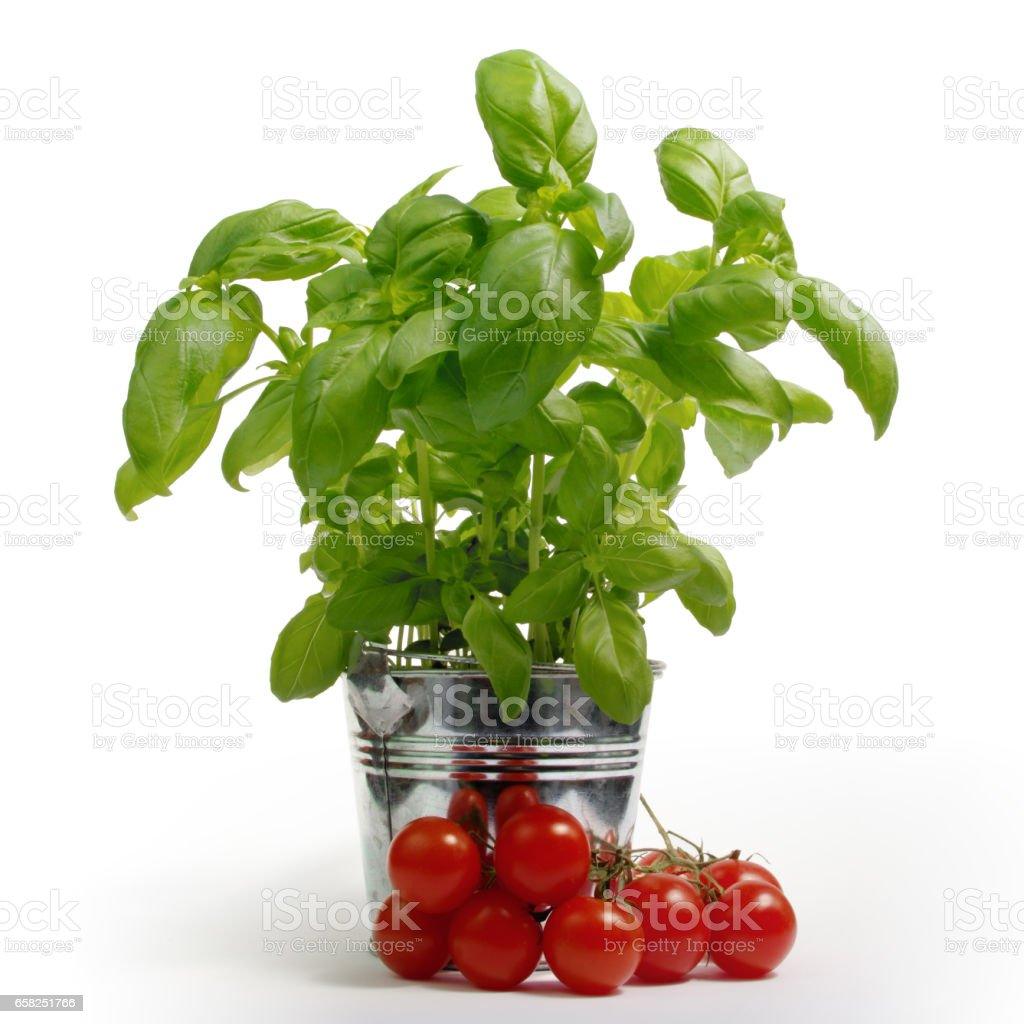 Basil in bucket with tomatoes stock photo