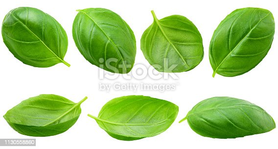 basil, isolated on white background, clipping path, full depth of field