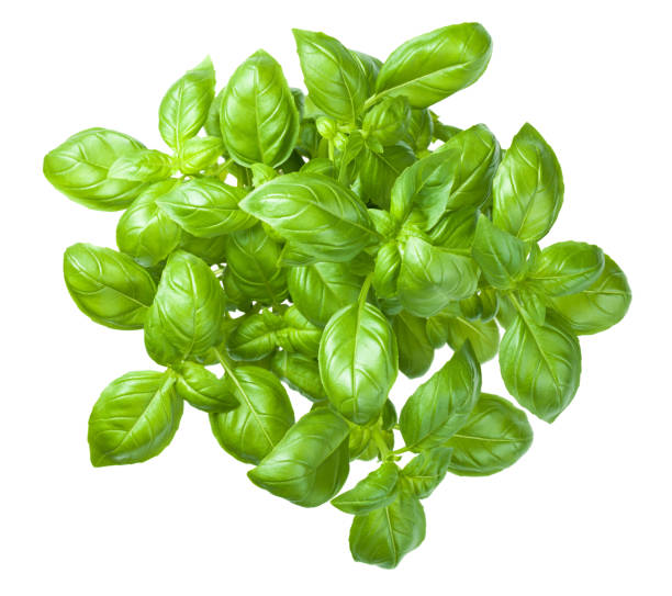 basil isolated on white background - basil stock photos and pictures