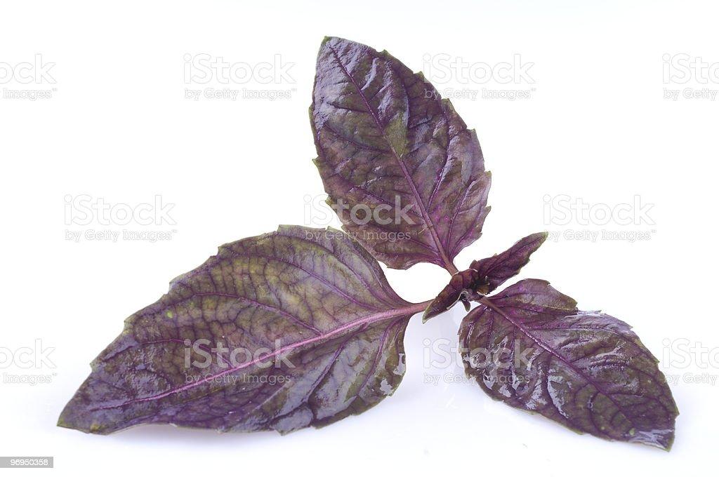 Basil leaf isolated on white royalty-free stock photo
