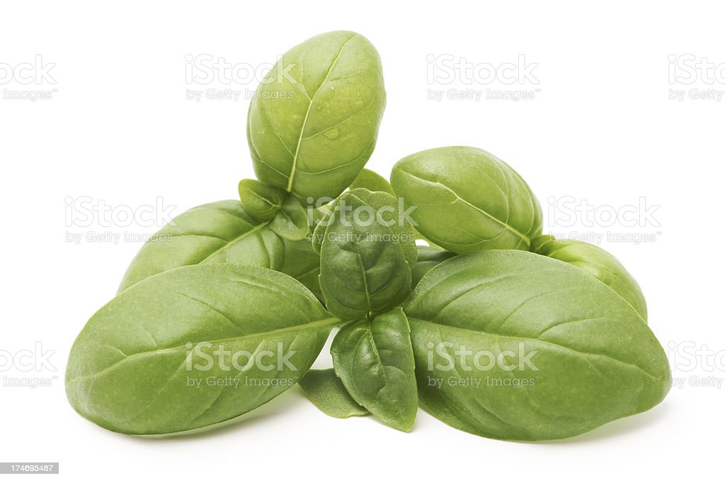 Basil leafs isolated on white royalty-free stock photo