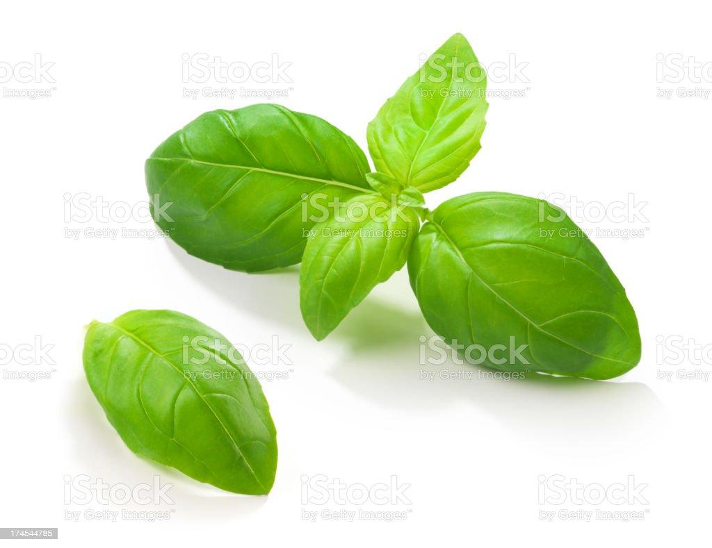 Folhas de manjericão - foto de acervo