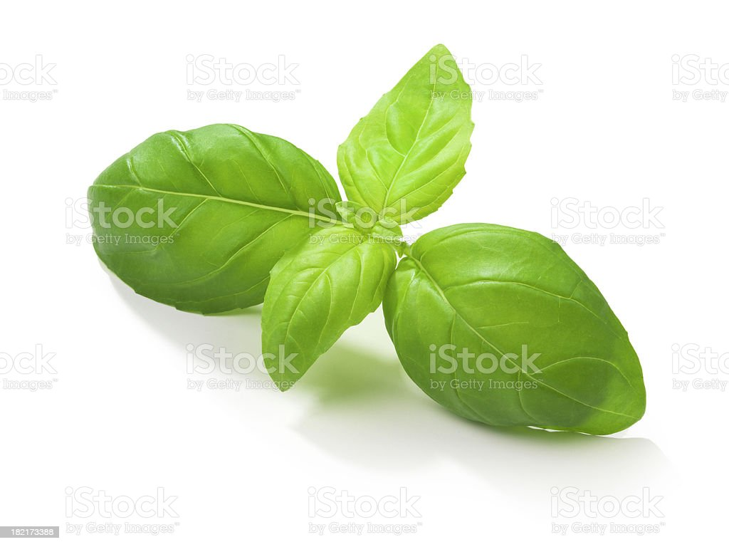 Basil Leafs stock photo