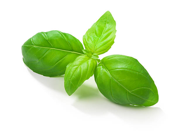 basil leafs - basil stock photos and pictures
