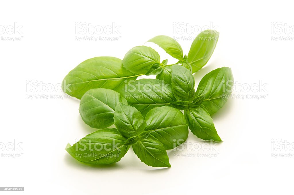 Basil Leaves -1 stock photo