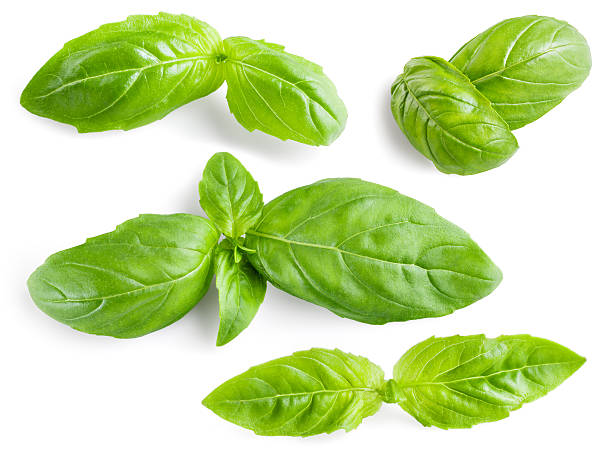 basil leaves isolated. collection - basil stock photos and pictures