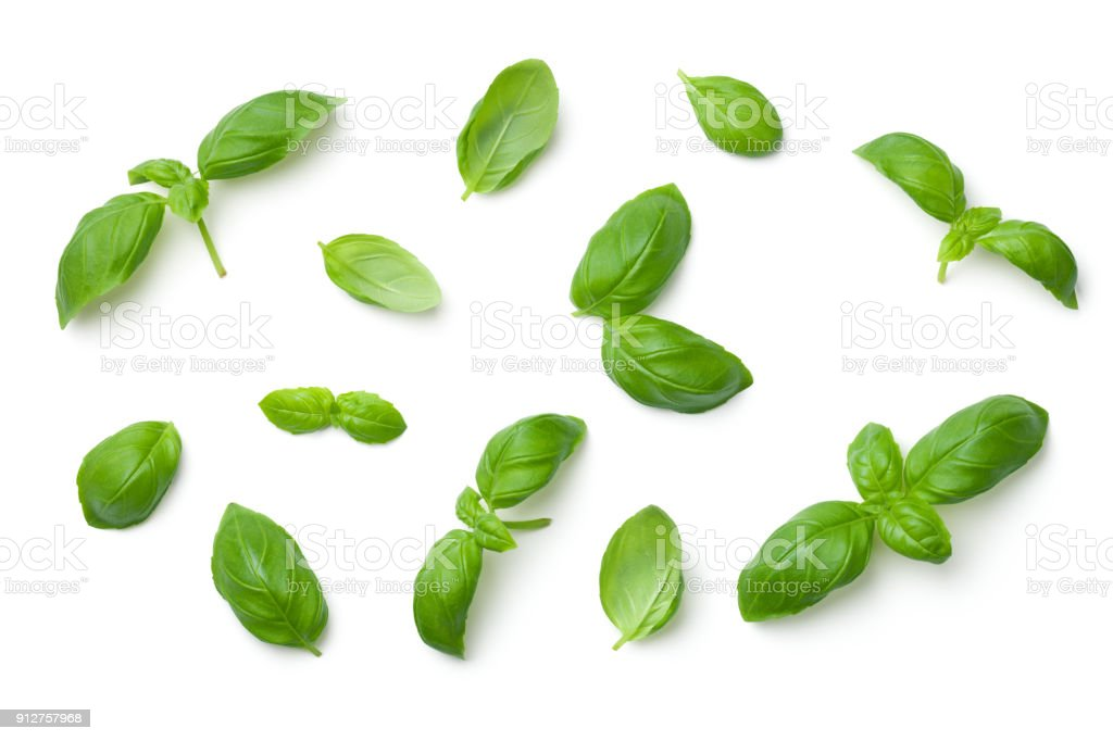 Basil Leaves Isolated on White Background - fotografia de stock