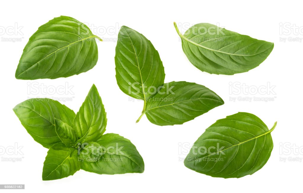 Folhas de manjericão isolado no fundo branco - foto de acervo