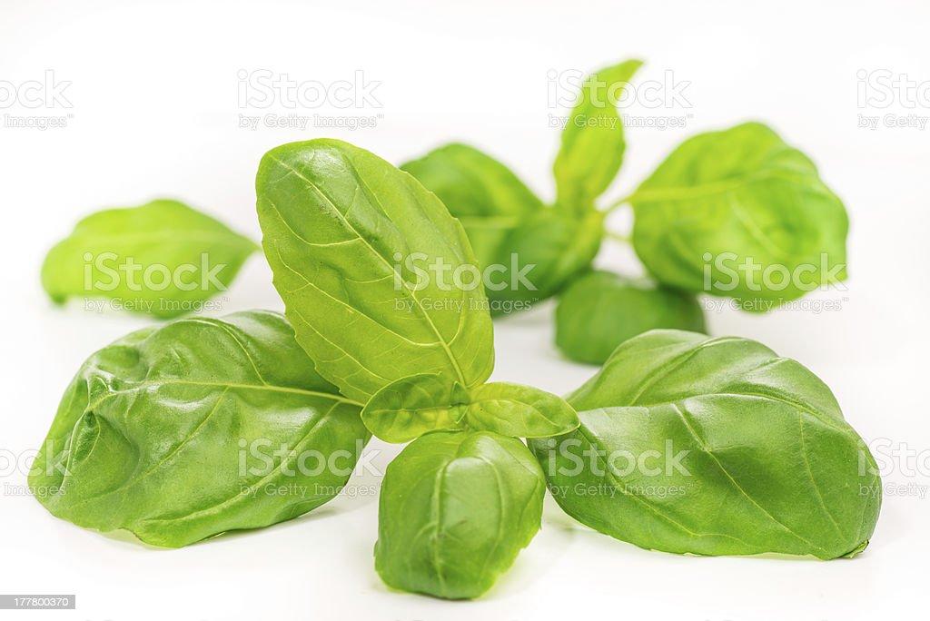 Basil leaves, isolated on white stock photo