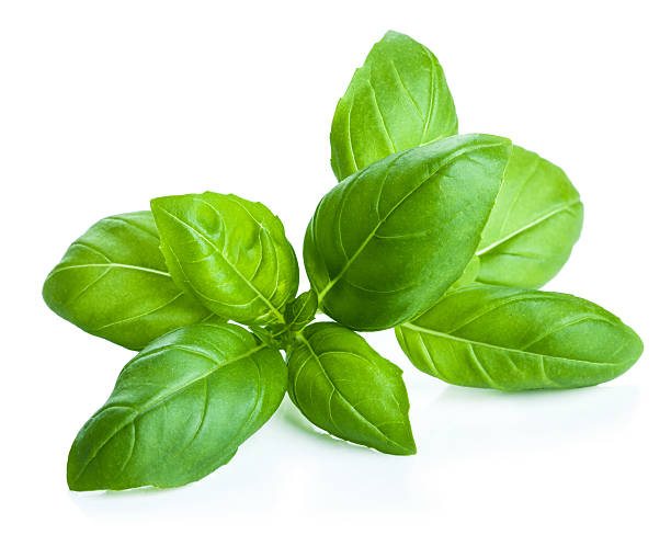 basil leaves isolated - basil stock photos and pictures