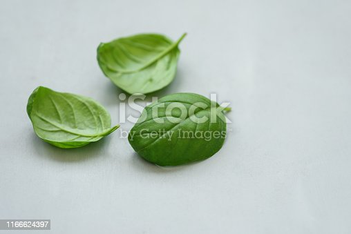 Basil leaves on gray background. Healthy food or cooking concept. Copy space