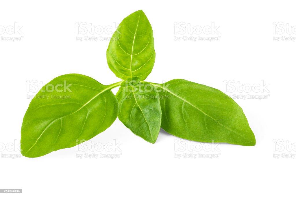 Basil Leaves on White royalty-free stock photo