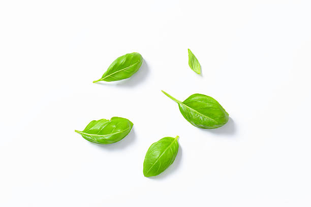 basil leaves - basil stock photos and pictures
