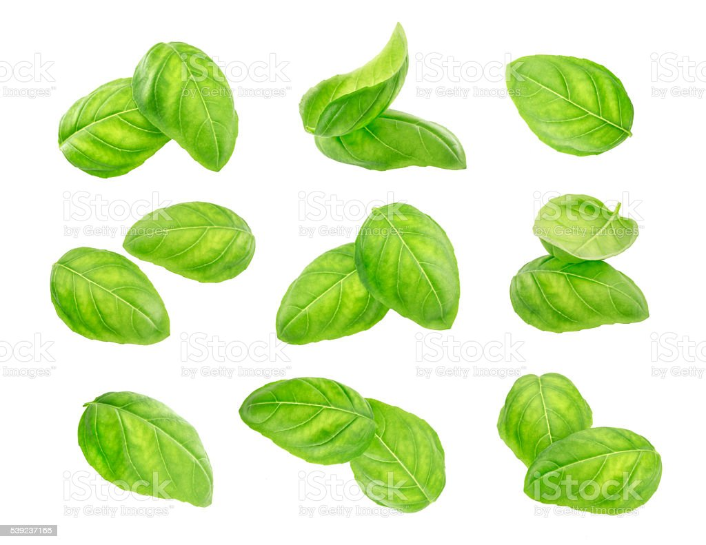 Basil leaves spice closeup isolated on white background. royalty-free stock photo