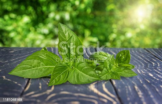 Basil on a old  wooden table outdoors