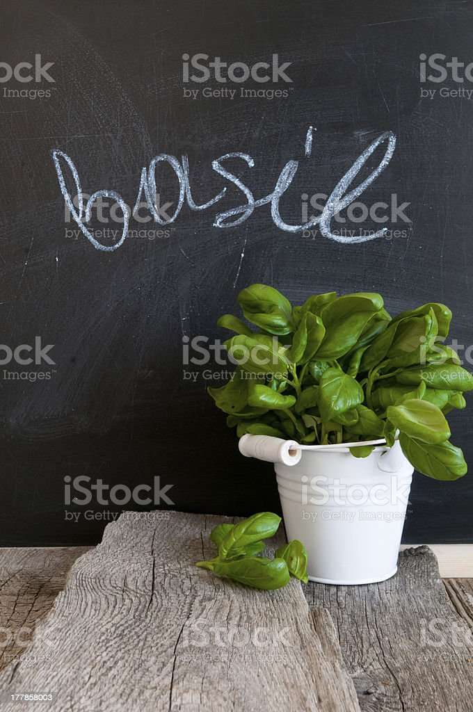 Basil plant in front of a chalk board with basil above stock photo