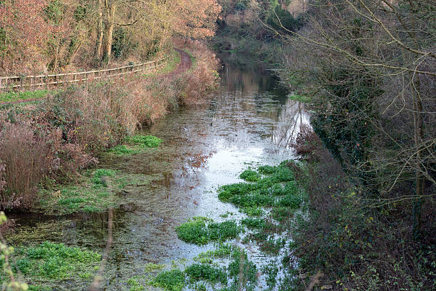 Basingstoke Canal and towpath at Greywell, UK stock photo